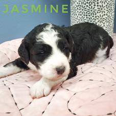 Jasmine (2).jpeg