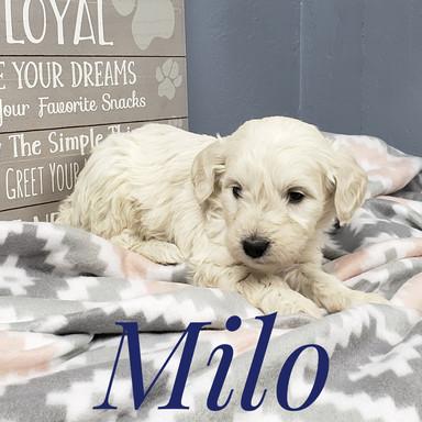 Milo (3).jpeg