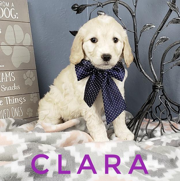 Clara (9).jpeg