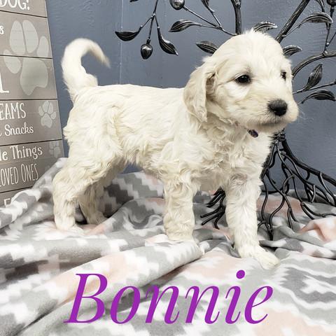 Bonnie (4).jpeg