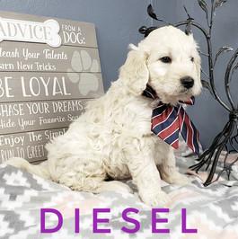 Diesel (7).jpeg