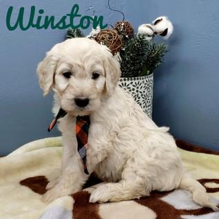 Winston (3).jpeg