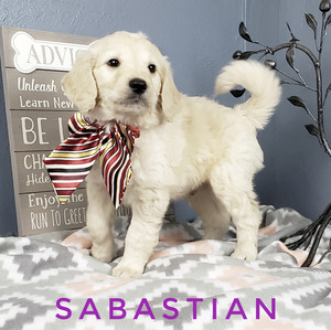Sabastian (2).jpeg