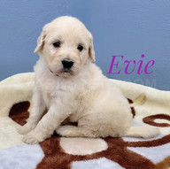 Evie (3).jpeg