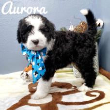 Aurora (20).jpeg