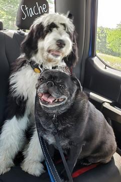 Stache and Pug Bud