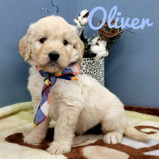 Oliver (2).jpeg