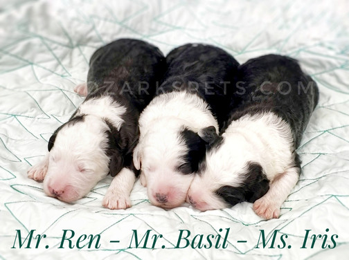 Ren Basil Iris.jpeg