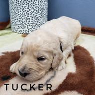 tucker (2).jpeg