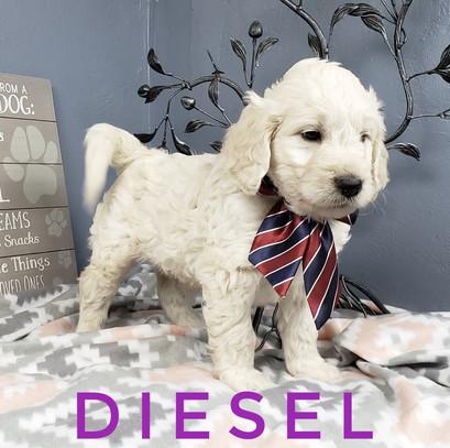 Diesel (4).jpeg