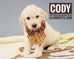 Cody (4).jpeg