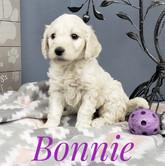Bonnie (7).jpeg