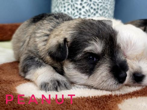 Peanut (5).jpeg