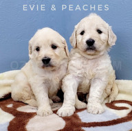 Evie Peaches (2).jpeg