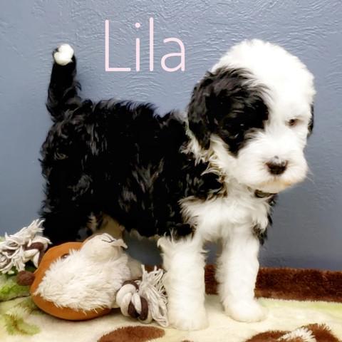 Lila (6).jpeg