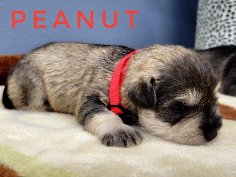 Peanut (4).jpeg