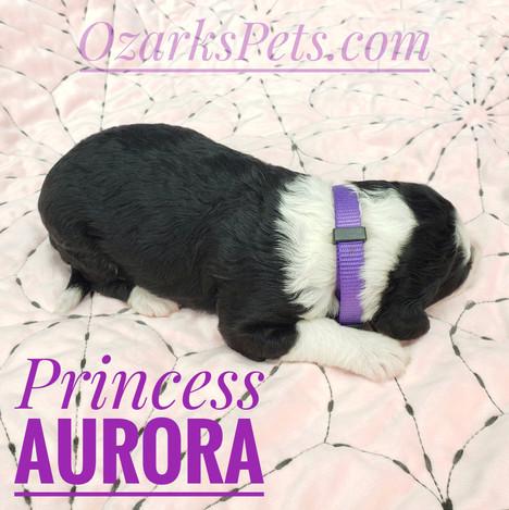 Aurora (1).jpeg