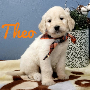 Theo (1).jpeg