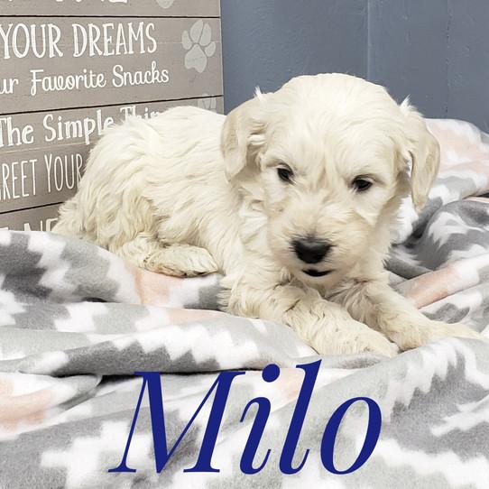 Milo (4).jpeg
