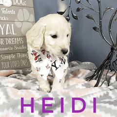 Heidi (3).jpeg