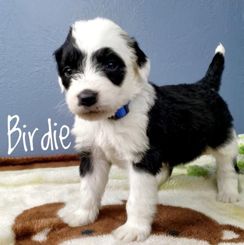 birdie (2).jpeg