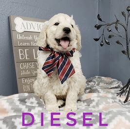 Diesel (2).jpeg