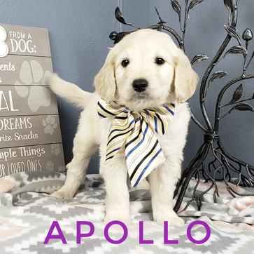 Apollo (3).jpeg