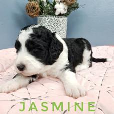 Jasmine (4).jpeg