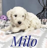 Milo (6).jpeg