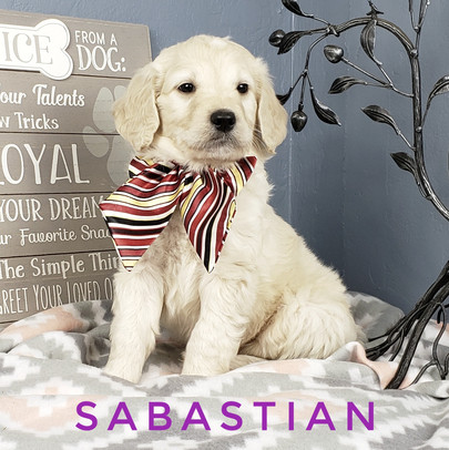 Sabastian (6).jpeg