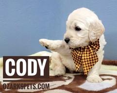 Cody (7).jpeg