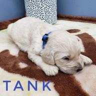 tank (2).jpeg