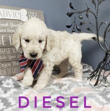 Diesel (8).jpeg