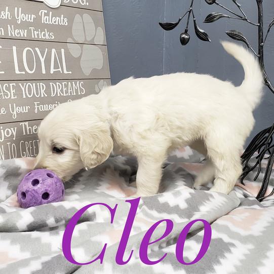 Cleo (4).jpeg
