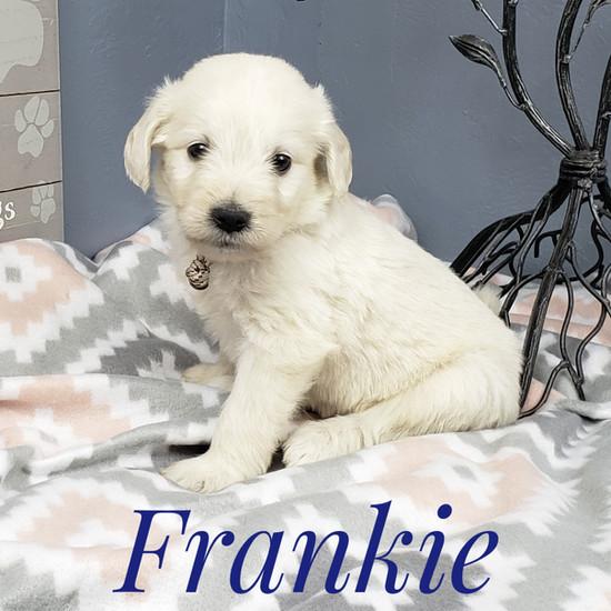Frankie (4).jpeg