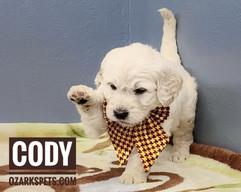 Cody (3).jpeg