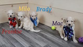 Frankie Milo Brady Mac.jpg