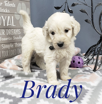 Brady (4).jpeg