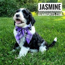 jasmine (9).jpeg