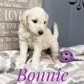 Bonnie (6).jpeg