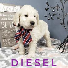 Diesel (1).jpeg