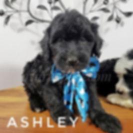 ashley (2).jpg