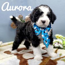 Aurora (21).jpeg