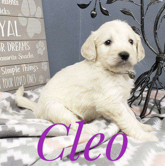 Cleo (1).jpeg