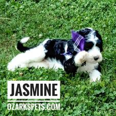 jasmine (11).jpeg