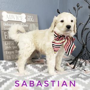 Sabastian (8).jpeg