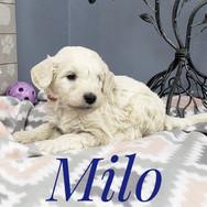 Milo (1).jpeg