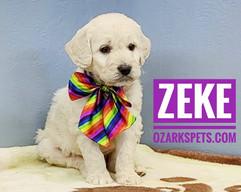 Zeke (3).jpeg