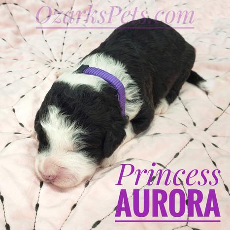 Aurora (2).jpeg