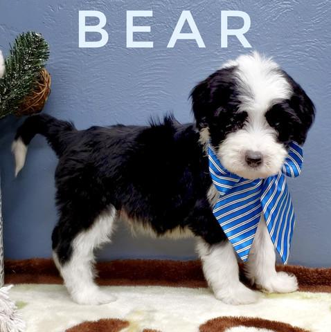 BEAR (8).jpeg
